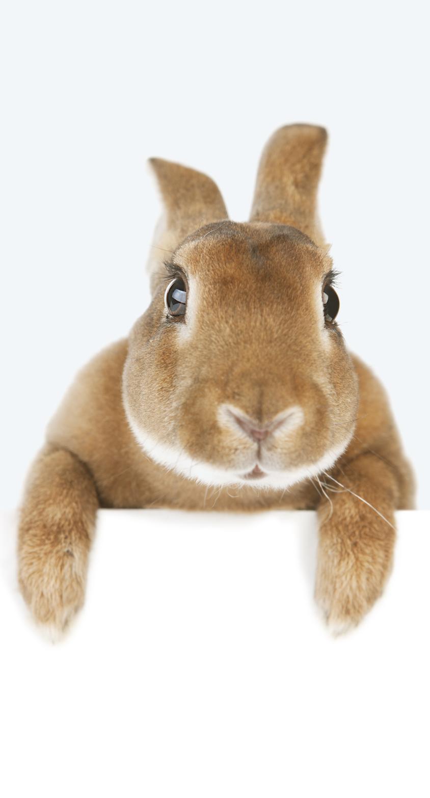 rabbit holding banner