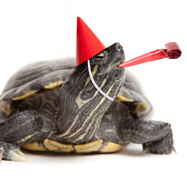 turtle wearing party hat cropped square