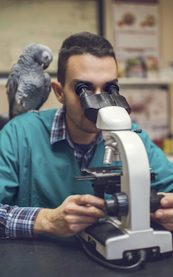 veterinarian w bird and microscope
