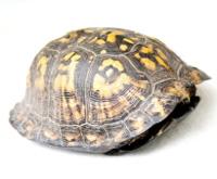 Box shell