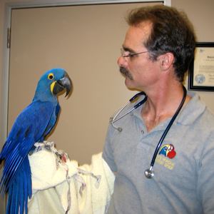 Speer with hyacinth macaw