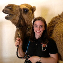 Murray w camel