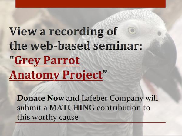 Grey Parrot Recording