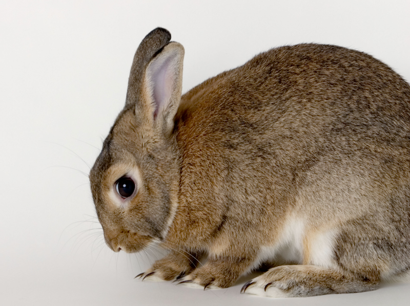 hunched rabbit