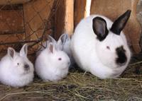 multi sized rabbits
