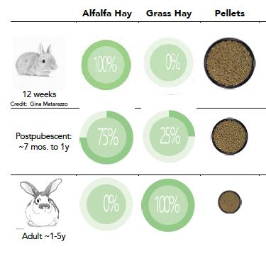 rabbit infographic