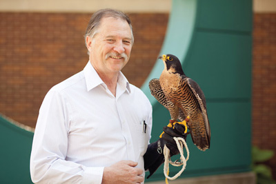 Redig with falcon