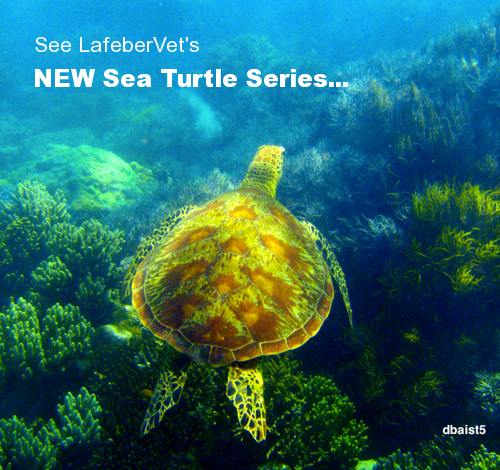 sea turtle series