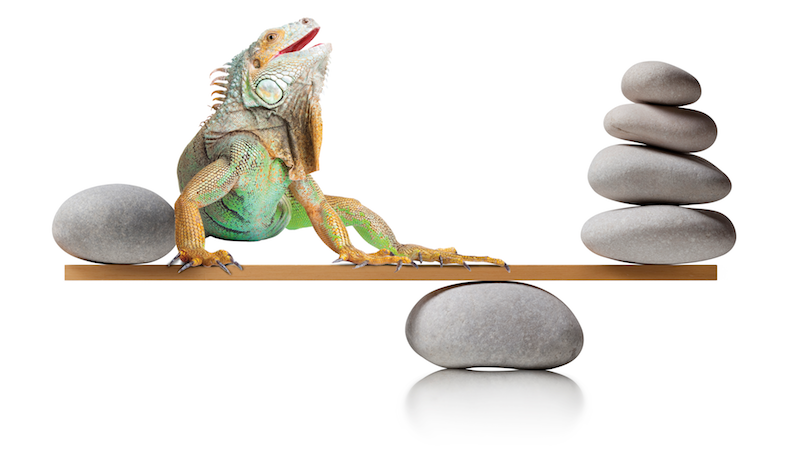 balancing_stones_reptile_cropped_copy.png