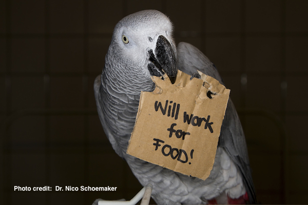 grey parrot holding will work for food nico sign