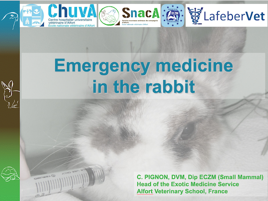 Emergency and Critical Care of Rabbits